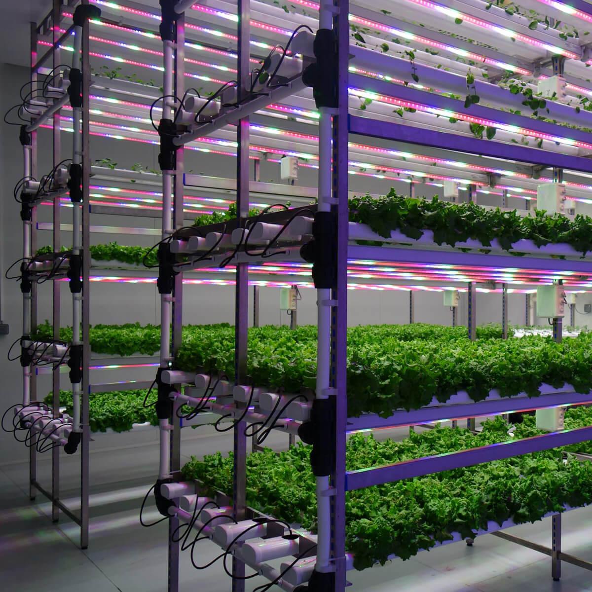 <ul> <li>Développement d'essais à petite échelle sur des plantes dans des conditions parfaitement contrôlées, capables de reproduire les conditions de n'importe quelle région du monde; en plus de générer des situations de stress extrême.</li> <li>Possibilité d'émuler des climats extrêmes de -5℃ à 35ºC.</li> <li>De 0% à 100% d'humidité.</li> <li>Photopériode contrôlée.</li> </ul>