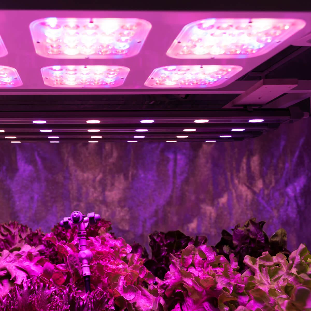 <ul> <li>تنفيذ جميع أنواع التجارب على النبتة السليمة والنبتة المريضة</li> <li>الفترة الضوئية تحت التحكم</li> </ul>